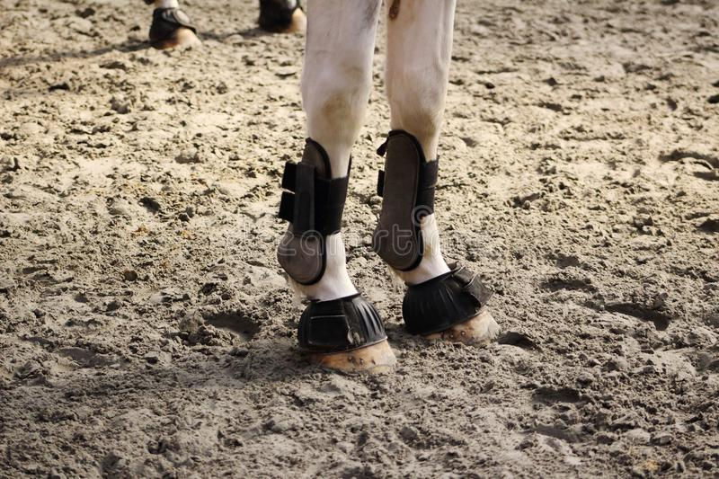 Ball protections of anterior horses set up with hoof bell royalty free stock photo