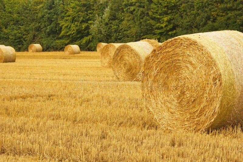 Balla del giacimento di grano fotografia stock