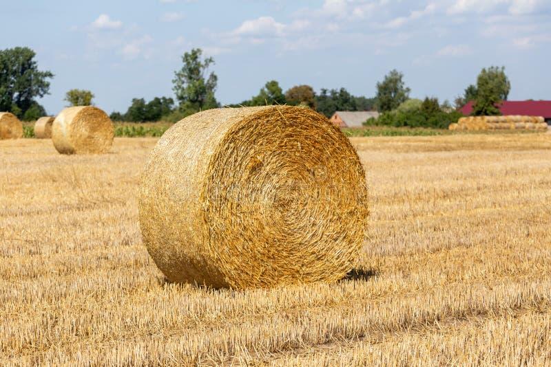 Balla della paglia dopo il raccolto sul campo il giorno soleggiato di estate immagine stock libera da diritti