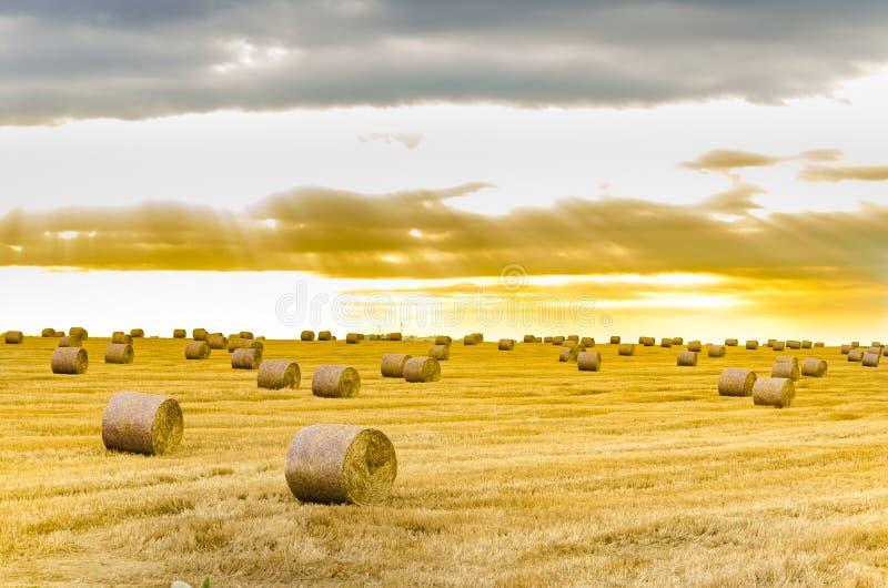 Balla di fieno nella priorità alta nel campo rurale immagini stock