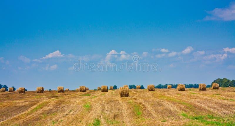Download Balla Rotonda Di Paglia Nel Campo Immagine Stock - Immagine di grano, autunno: 21550267