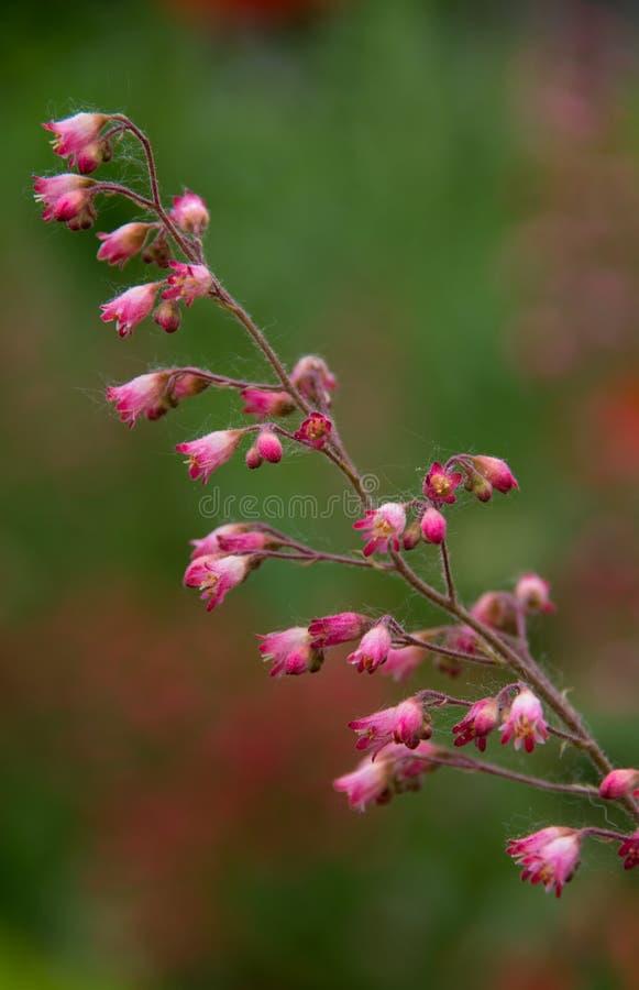 Ballare dei fiori immagini stock