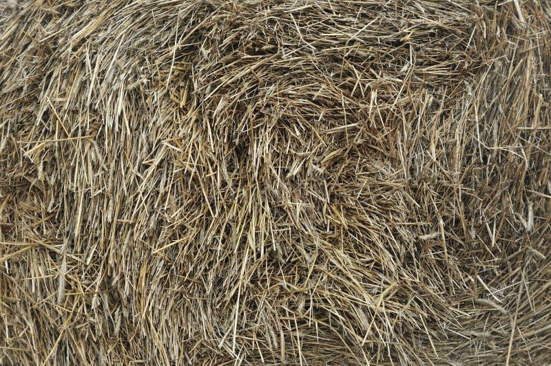 Balle de plan rapproché de foin comme ferme d'agriculture et symbole de ferme de temps de récolte avec la paille d'herbe sèche co images libres de droits