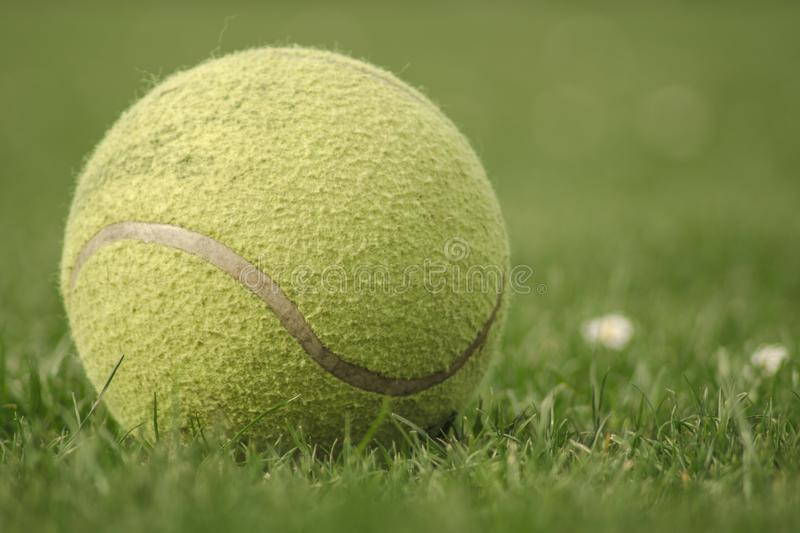 Balle de tennis sur l'herbe photos stock