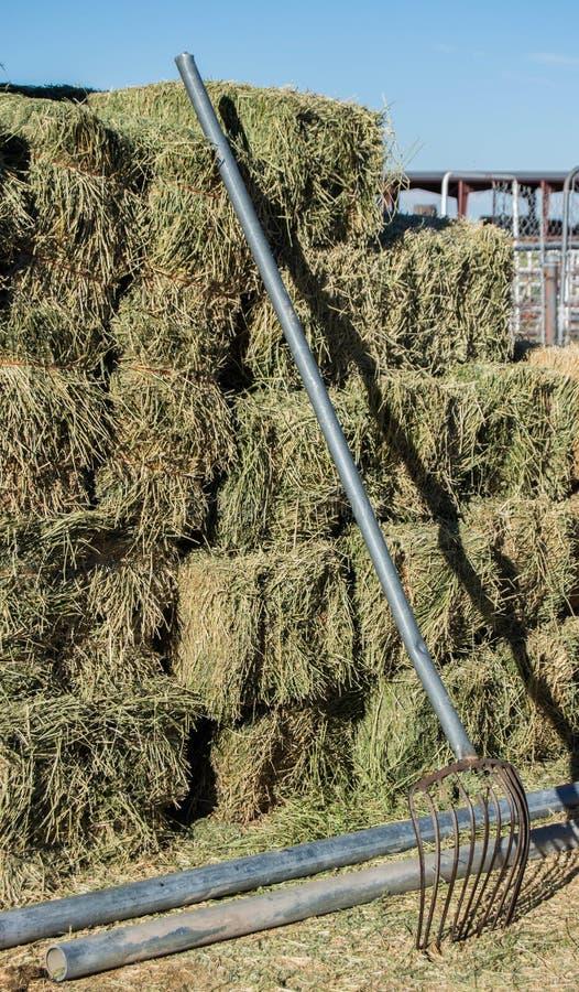 Balle di fieno dell'alfalfa impilate con la forcella del passo sull'azienda agricola fotografia stock