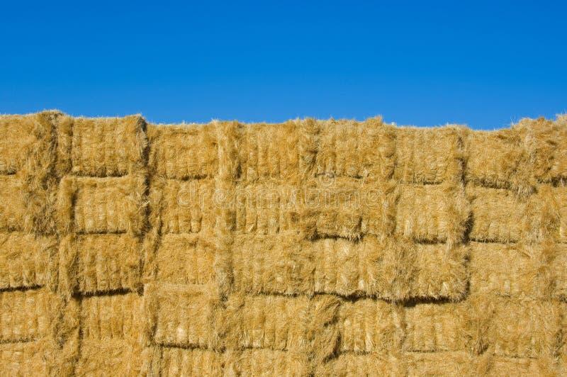 Download Balle di fieno impilate immagine stock. Immagine di agricoltura - 7303493