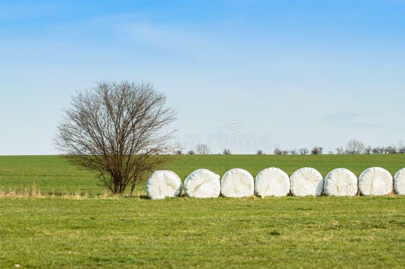 Balle di fieno impilate ed imballate, in un campo coltivato fotografie stock