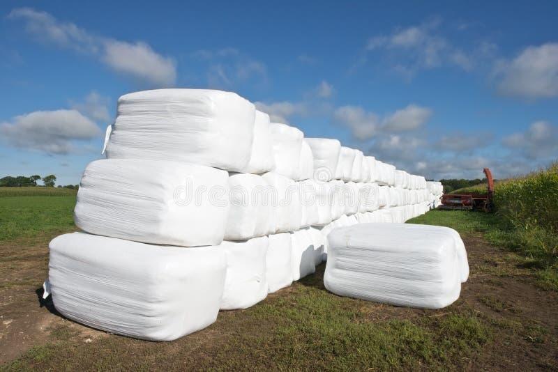 Balle di fieno moderne dello stabilimento lattiero-caseario nei sacchetti di plastica fotografia stock libera da diritti