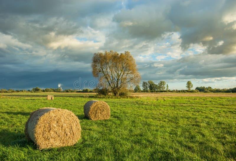 Balle di fieno nel prato, nel grande albero e nelle nuvole variopinte fotografie stock libere da diritti