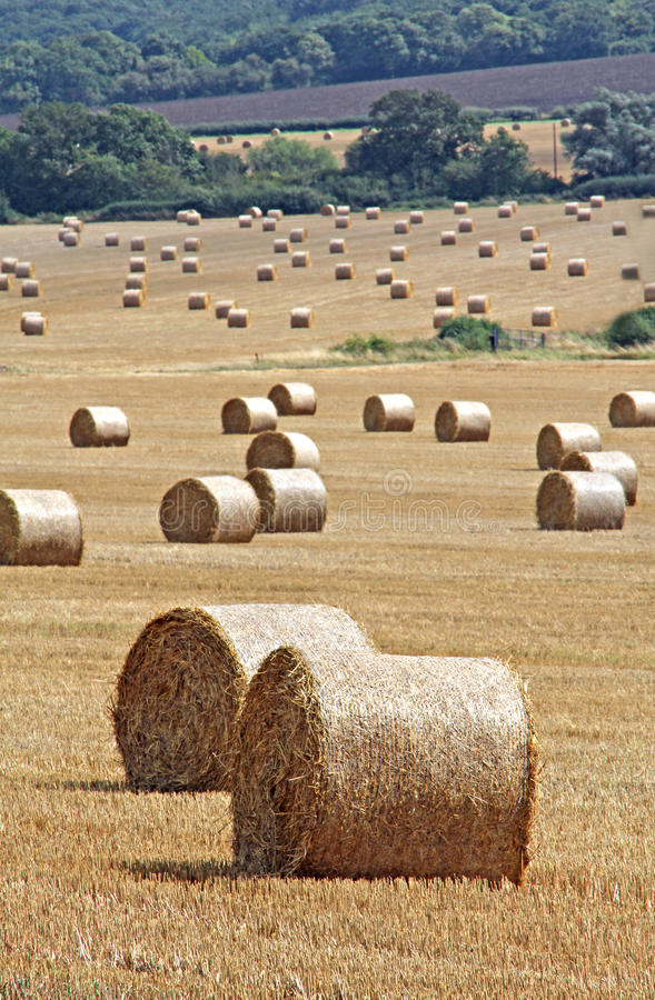 Balle di fieno in risonanza rurale immagini stock libere da diritti
