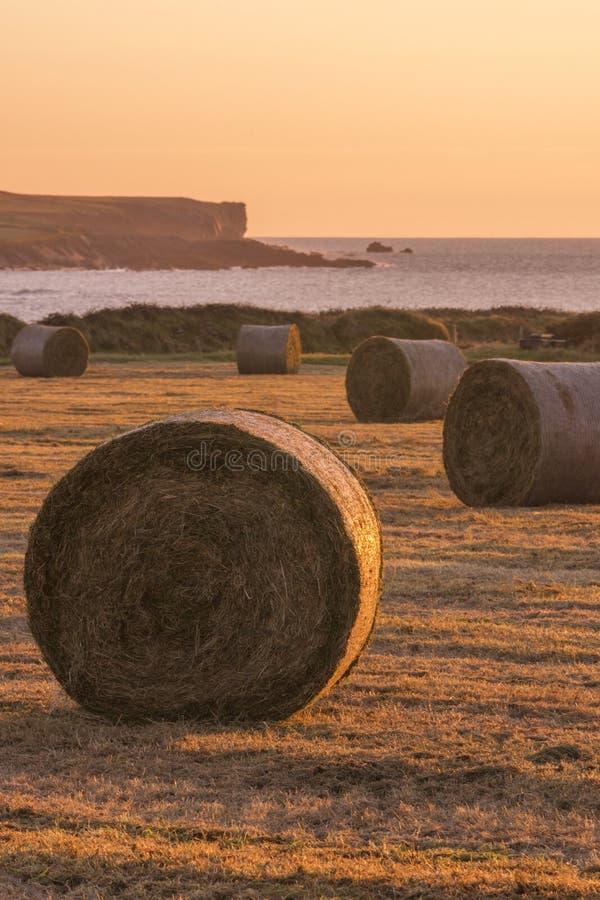 Balle di fieno sulla costa ovest dell'Irlanda immagini stock