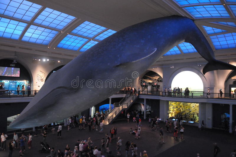ballena azul imagen de archivo