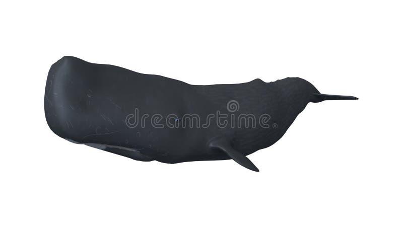 ballena de esperma de la representación 3D o Cachalot en blanco stock de ilustración