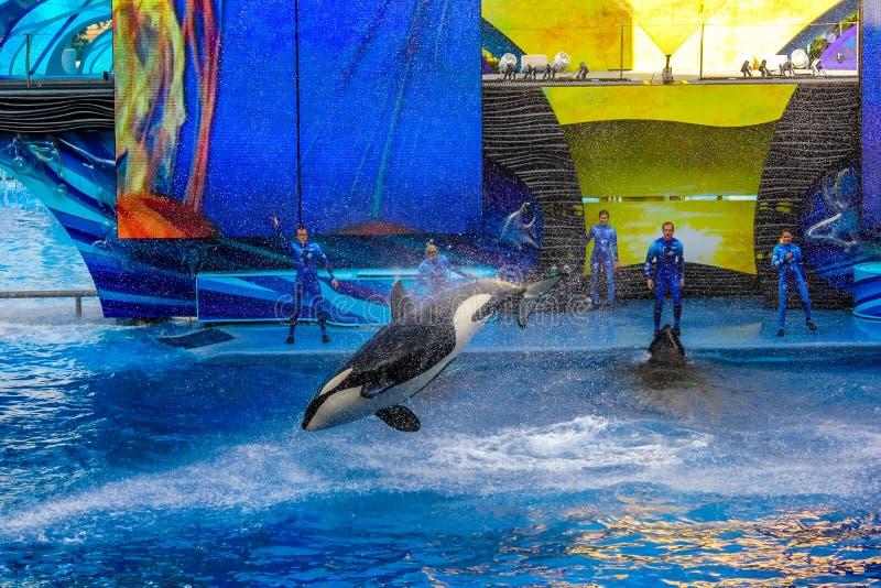 Ballena de la orca de Tilikum fotos de archivo libres de regalías