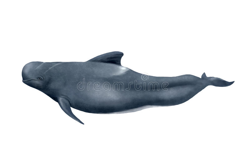 ballena experimental Largo-aletada libre illustration