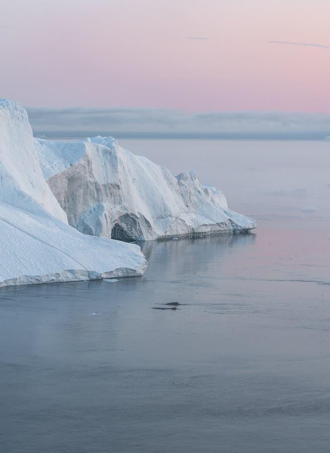 3 ballena jorobada bucear cerca de Ilulissat entre icebergs durante el sol rosa de medianoche Amanecer y atardecer Su fuente es l foto de archivo