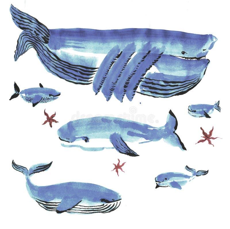 Ballenas azules ilustración del vector
