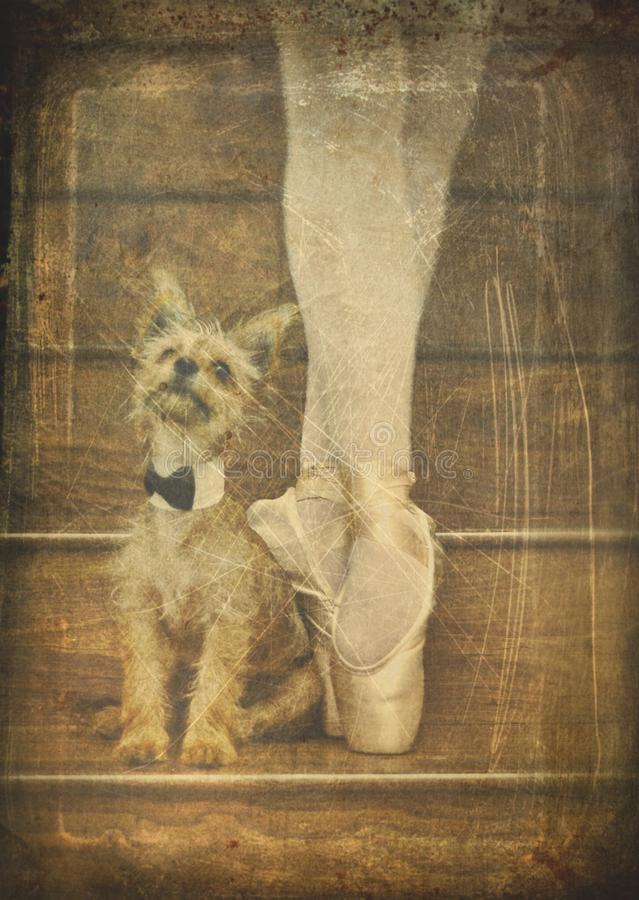 Ballerina και σκυλί στοκ φωτογραφία με δικαίωμα ελεύθερης χρήσης