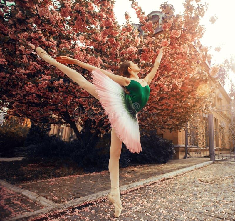 Ballerinaanseendet i arabesque poserar mot bakgrunden av att blomma sakura tr?d royaltyfri foto