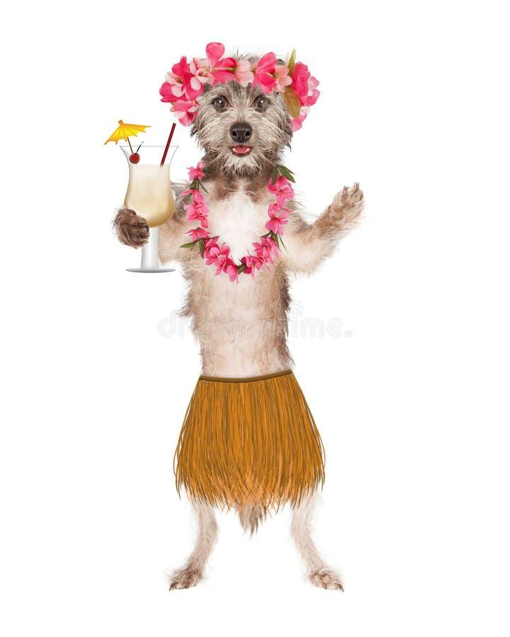 Ballerino With Drink di hula del cane immagini stock libere da diritti