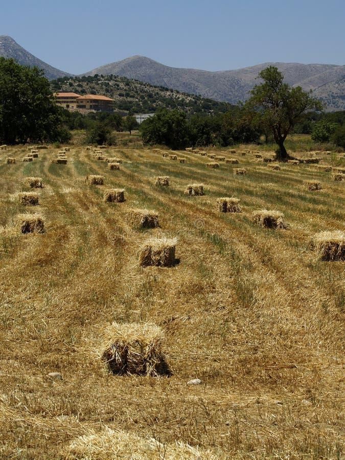 Balles de foin carrées dans une vallée photos libres de droits