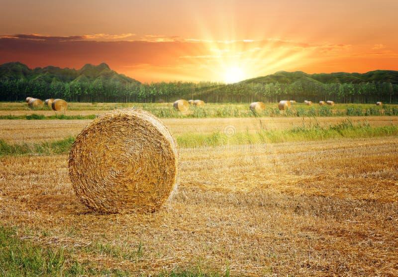 Balles de foin dans le coucher du soleil scénique photos libres de droits