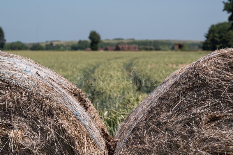 Balles de foin dans le premier plan Champ de blé à l'arrière-plan, avec des arbres sur l'horizon et un ciel bleu clair image libre de droits