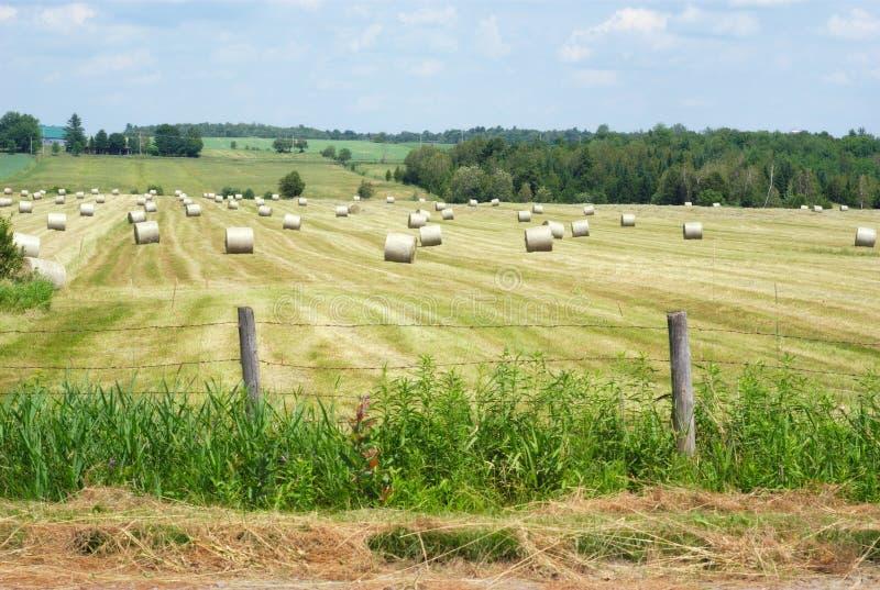 Balles de foin dans un domaine d'or d'herbe photo libre de droits