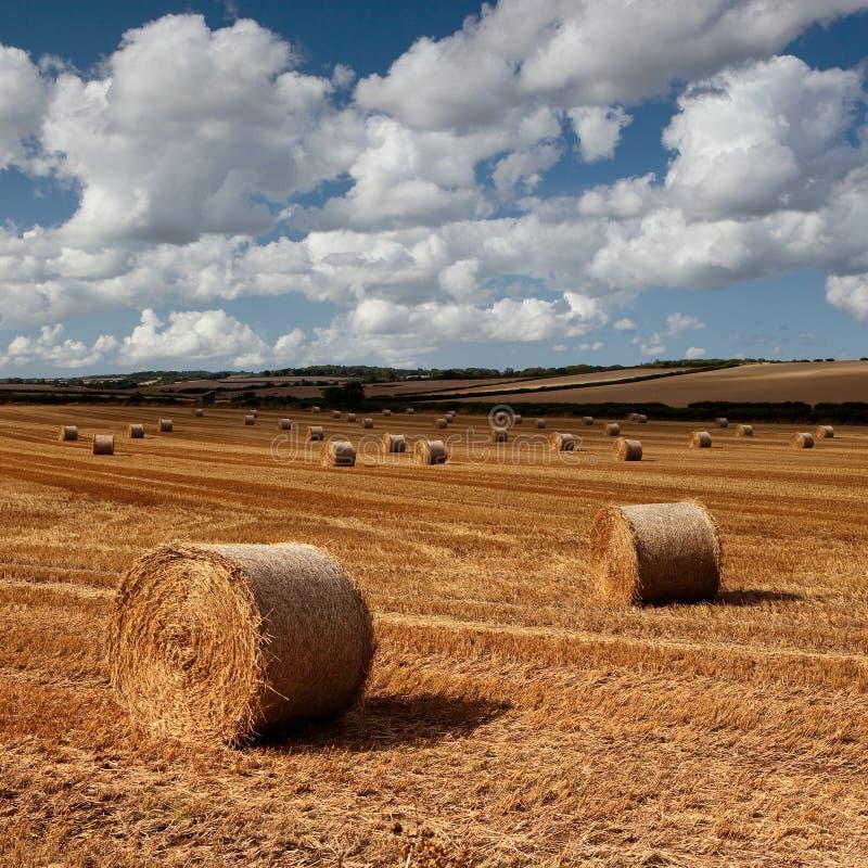 Balles de foin, Dorset, R-U images libres de droits