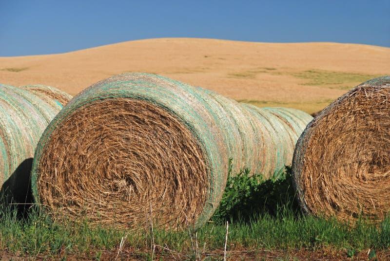 Balles de foin sur des terres cultivables photo stock