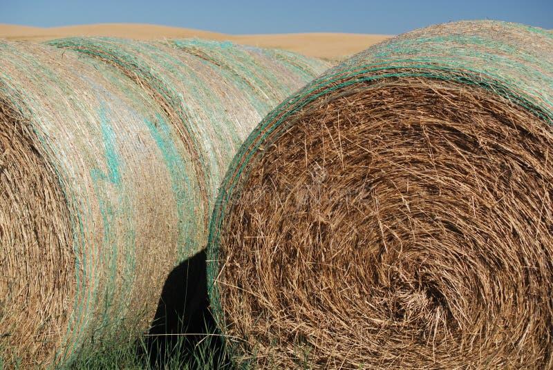 Balles de foin sur des terres cultivables image libre de droits