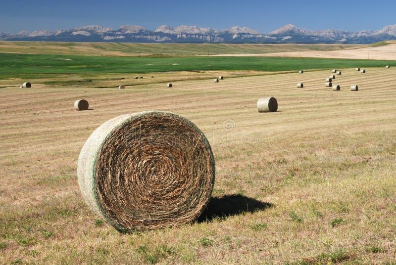 Balles de foin sur des terres cultivables images libres de droits