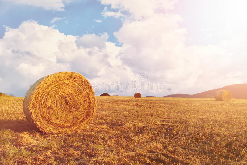 Balles de foin sur le champ après récolte, un temps clair Ciel bleu, nuages blancs Sun, brume du soleil, éclat photographie stock