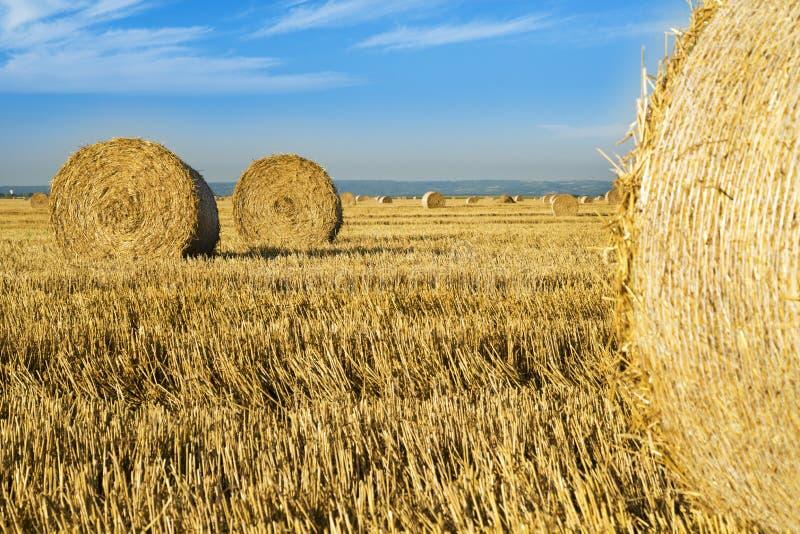 Balles de petit pain de blé au champ, scène de lever de soleil images stock