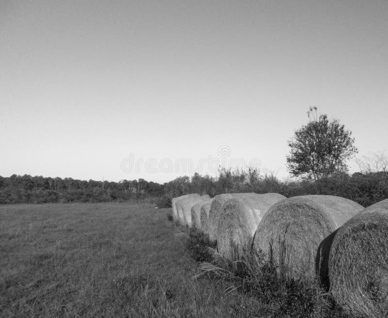 Balles de Rye dans un domaine dans les sud images stock