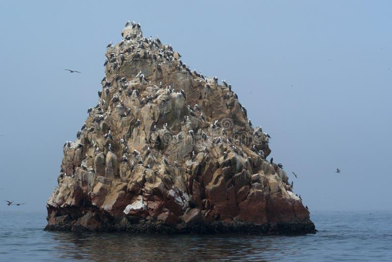 Download Ballestas Islands stock photo. Image of rock, america - 7547708