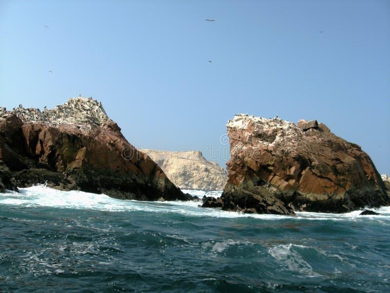 ballestas islas arkivfoto