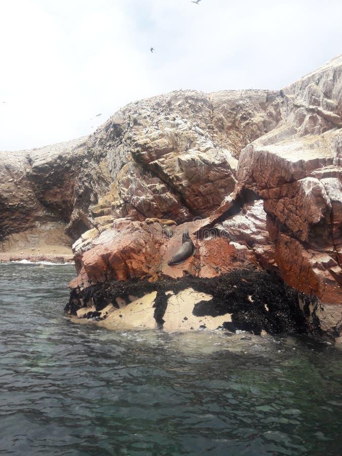 Ballestas Isole Paracas Perù formazioni rocciose pelicans pinguini leoni marini fotografie stock