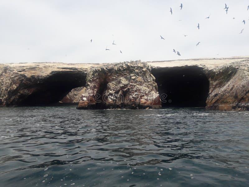 Ballestas Isole Paracas Perù formazioni rocciose pelicans pinguini leoni marini immagine stock libera da diritti
