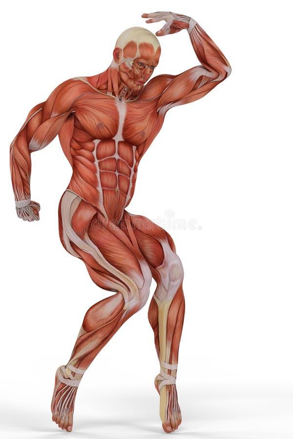 Ballet del hombre médico del músculo libre illustration