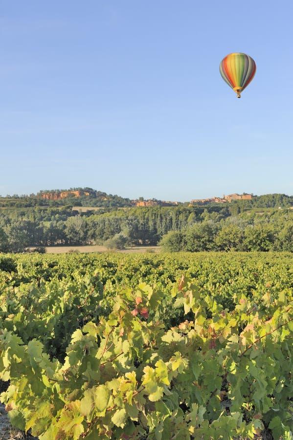 Ballon à air chaud au-dessus de vigne photos stock
