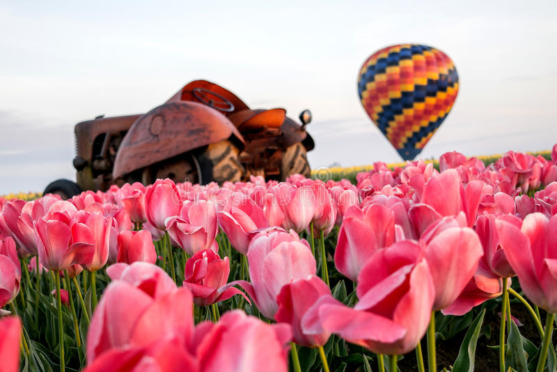 Ballon à air chaud, tracteur, tulipes roses image libre de droits
