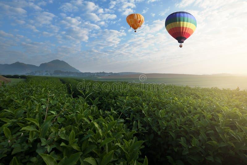 Ballon à air chaud volant au-dessus de la plantation de thé dans le matin images stock
