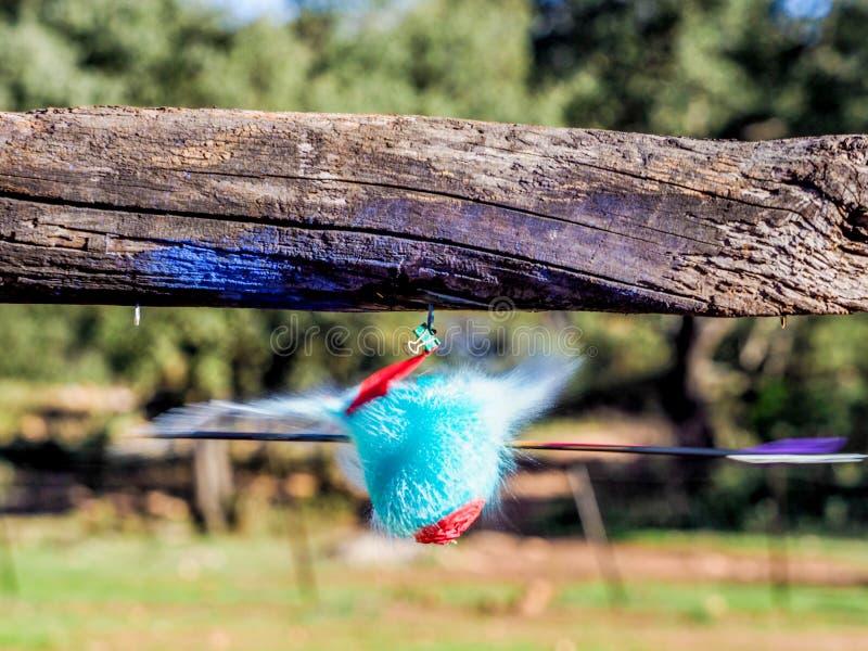 Ballon füllte mit farbigem Wasser, das als geschlagen durch einen Pfeil explodiert stockfoto