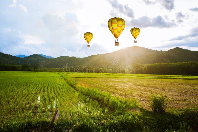 Ballon lata nad ryżu pola rankiem obrazy stock