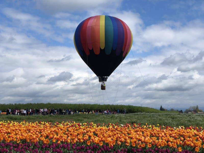 Ballon och tulpan för varm luft royaltyfri foto