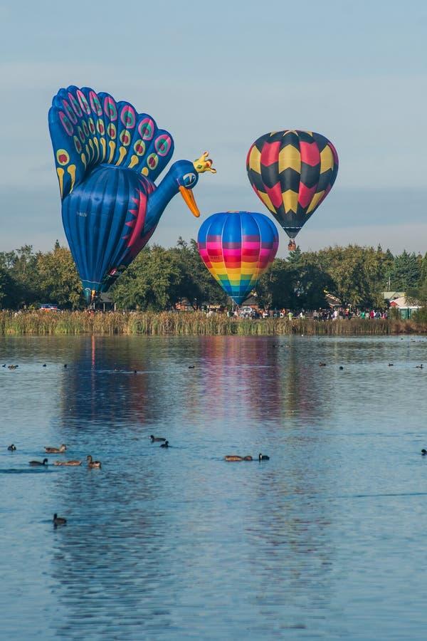 Ballonger över Waikato fotografering för bildbyråer