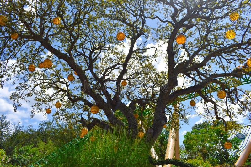 Ballons hunging de beau whith d'arbre sur le fond de Hunt Rollercoaster de ciel bleu et de guépard, à photos libres de droits