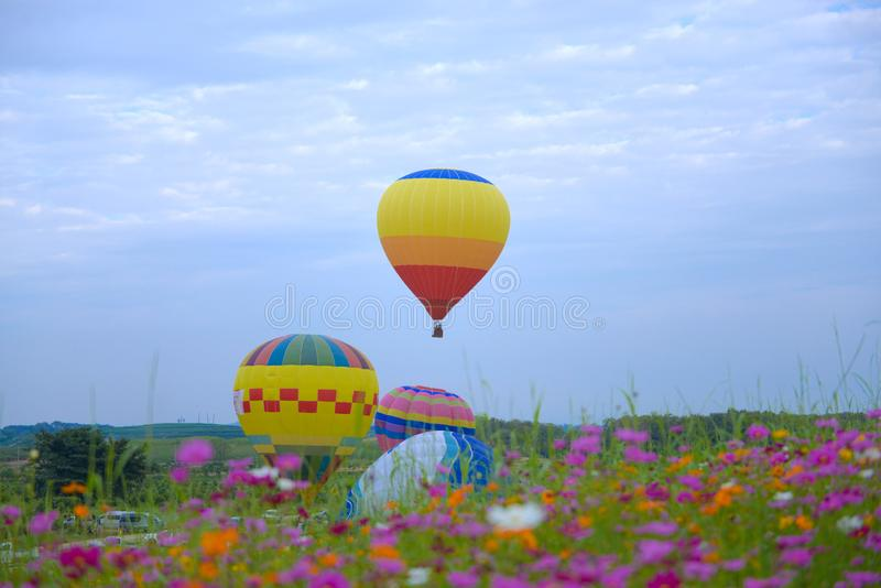 Balloon festival during winter in Chiangrai, Thailand . Balloon festival during winter in Chiangrai, Thailand with cosmos flower field plantation on ground stock image