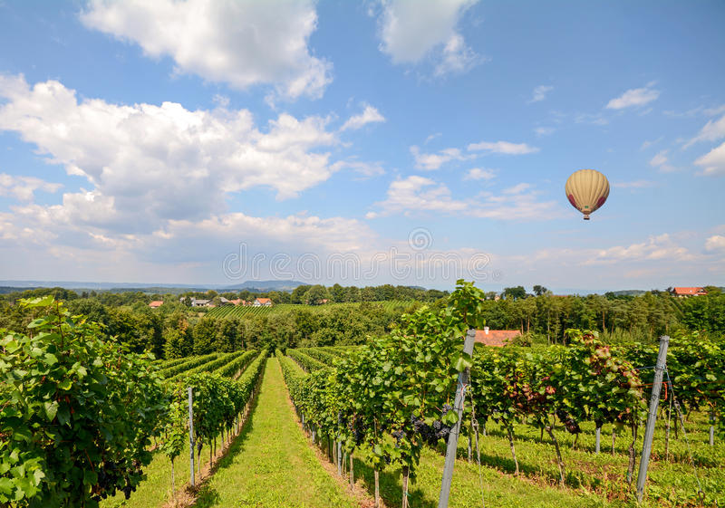 Balloon o voo sobre uvas do vinho tinto no vinhedo antes da colheita, Styria Áustria foto de stock royalty free